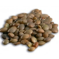 Lentil Organic from Villalba