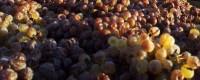 Vins doux siciliens