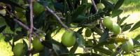 Selezione di oli extravergine di oliva siciliani