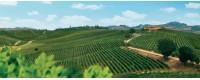 wines sicilian