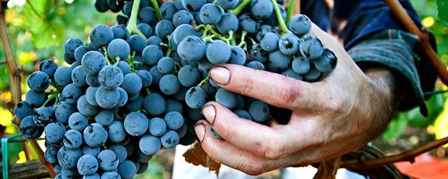 VIns  rouges siciliens