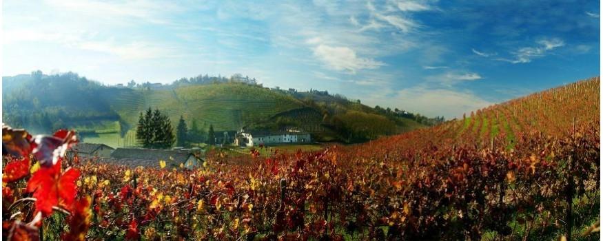 Veneto wines, Tuscan wines, wines from Friuli