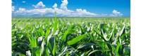 Prodotti Tipici da Agricoltura Biologica