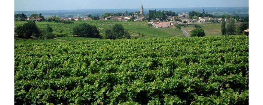 Selezione Terramadre.it di vini internazionali