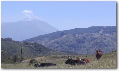 Monti Nebrodi - Pascoli